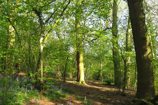 woodland-woods-thumb